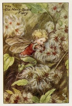 Old-Man's-Beard Flower Fairy Vintage Print, c.1927 Cicely Mary Barker Book Plate Illustration