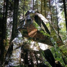 숲 바위 - Google 검색