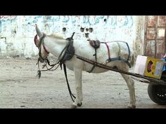 Donkeys used to clean up streets of Gaza