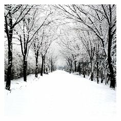Avenue of white bordered by crisply black, leafless trees