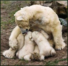 Bears are some of the best moms in the animal kingdom.