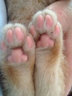 My, what cute little feet you have!