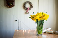 50 Golden Daffodils with their foliage