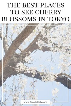 The Best Places to See Cherry Blossoms in Tokyo   fleurdelilah #cherryblossoms #tokyo #japan #tips #gardens #shinjuku #travel #travelblog #expatblog