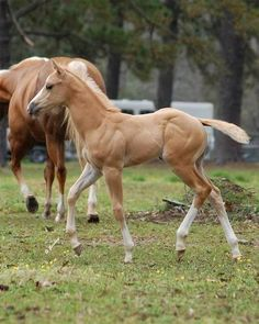 this little filly looks like a bryer horse :) :P shes perfect. i really like blondie horses