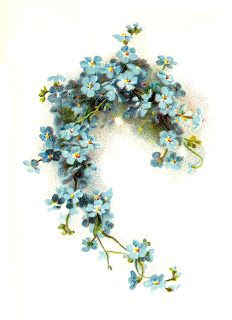 "Make in shape of an ""S""?  Antique Images: Free Flower Clip Art: Blue Forget-Me-Not Flower Graphic from Wedding Book"