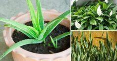 Descubre qué plantas puedes tener en tu habitación para disfrutar de un mejor descanso.