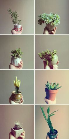 Little pots. Jacinta Moore photography via Sherie Muijs blog.