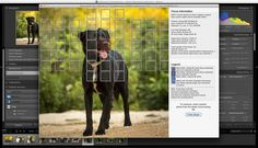 Lightroom Focus Point Plug-in for Nikon and Canon.