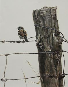 Robert Bateman - House Sparrow - Search Gallery One for Bateman, Robert limited edition prints, giclee canvases and original paintings by internationally-known artists Wildlife Paintings, Wildlife Art, Animal Paintings, Watercolor Bird, Watercolor Animals, Dom Quixote, Afrique Art, Historia Natural, Canadian Art