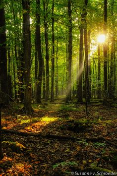 Read the full title Nature Photography, Beam of Sun Light, Fine Art Print, Sun Ray, Summer Autumn Woodland, Green Yellow, Fairy Land, Magical, Cabin Home Decor