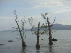 View at Chidiyatapu Port Blair, Andaman And Nicobar Islands, Travel Information, Tourism, Mountains, Beach, Water, Places, Outdoor