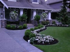 Outdoor & Garden: Pretty Front Yard Landscaping With White Flowers And Boxwood Roses On Black Mulch Plus Turf Grass For Traditional Exterior With Wood Siding Also White Columns With Stone At Bottom, tin roof, brick walkway ~ Franklester