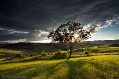 Behind the Tree / Steffen Springstein