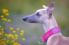 4cm wide, hand-made pink whippet collar with beautiful pattern.