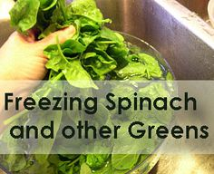 Learn how to freeze spinach or other greens the easy way at Simply Canning… Freezing Vegetables, Fresh Vegetables, Fruits And Veggies, Frozen Spinach, Frozen Fruit, Freezer Cooking, Cooking Tips, Freezer Meals, Smoothie Recipes