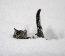 Inspiring image snow, cat #1368496 by nastty - Resolution 534x400px - Find the image to your taste
