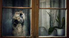 Sıcak havaların gelmesiyle pencere ve kapıları açık bırakmaya başlamamız hayvan dostlarımız için tehlike oluşturabiliyor. Detaylar ajanimo.com'da.. #ajanimo #ajanbrian #cat #animal #kedi #hayvan