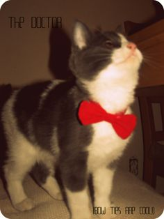 Bow ties are cool ! - The Doctor