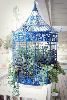 marne's succulent birdcage