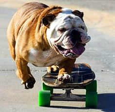 I can't put in words how obsessed I am with Bulldogs. They are so sweet and adorable and when I grow up they are all the babies I want! So CUTE.