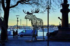 https://flic.kr/p/EeEHzC   Stockholm 493 - Berzelii park