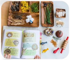 Invitation to build a nest using nature finds and home made chocolate rosemary play dough after reading Nature Anatomy (see my…