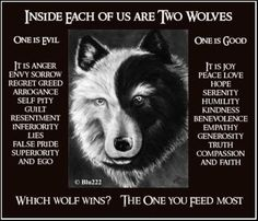 Do we Feed the Good Wolf or the Bad Wolf?   Cosmic Loti
