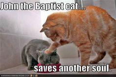 John the Baptist Cat