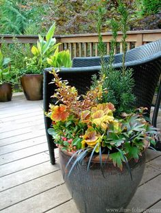 For the past two Tuesdays, we've brought you killer cool-season planting ideas from  Karen Chapman and Christina Salwitz, the Seattle-based authors of Fine Foliage. This week: Containers!