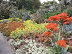 A trip to the Huntington Gardens in spring will demonstrate how beautiful blooming succulents can be.