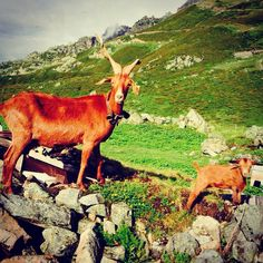 Wildlife in the Chamonix Mont Blanc area. There is so much to explore!
