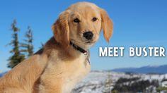 Meet Buster Sugar Bowl's newest patrol dog. 12/10 good boye.