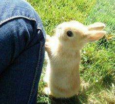 Извините, вы не подскажете где морковка?