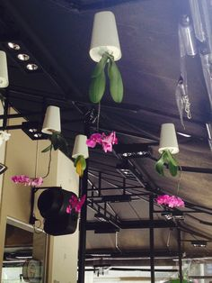 Orquídeas suspensas!!