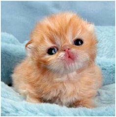 Newborn Kitten~