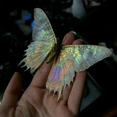 Is this a real butterfly?!
