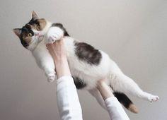 guremike # 10.... I love fat cats!!!!