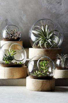 A base de madeira dá sofisticação a estes mini jardins minimalistas.