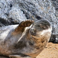 """""""It's too sunny""""seal"""