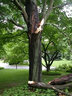 The Davey Tree Expert Company Provides Residential And Commercial Service Landscape Throughout North America