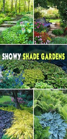 Shade Garden Ideas Showy Shade Gardens Wonderful tips and ideas!Showy Shade Gardens Wonderful tips and ideas! Shade Garden Plants, Garden Shrubs, Lawn And Garden, Plants For Shade, Shaded Garden, Hosta Gardens, Garden Oasis, Big Garden, Garden In The Woods