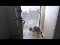 Rudger Only Kind of Loves Snow http://chzb.gr/1Dj2MEF