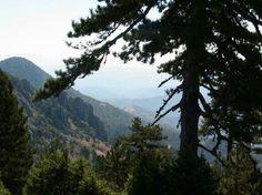 Θέα στο Σπήλαιο Greek Flowers, Forest Mountain, Tree Forest, Flowering Trees, Forests, River, Mountains, Landscape, Nature