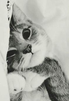 Cute Cat Japanese Names Cute Kittens Hd I Love Cats, Crazy Cats, Cute Cats, Funny Cats, Cute Kitty, Pretty Cats, Beautiful Cats, Animals Beautiful, Hello Beautiful