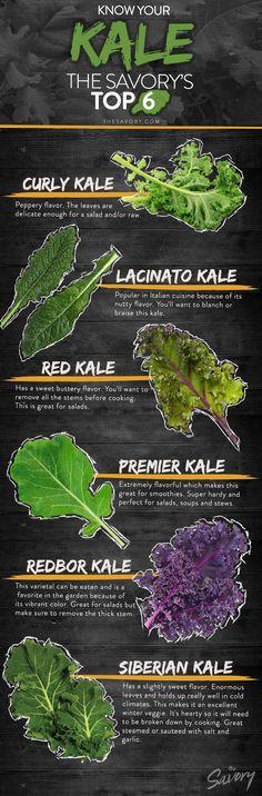 Know Your Kale: The Savory's Top 6 | Curly Kale, Lacinato Kale, Red Kale, Premier Kale, Redbor Kale, Siberian Kale