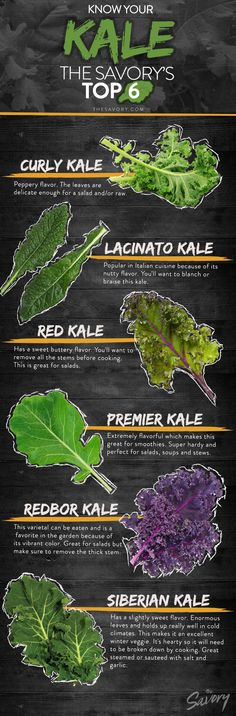Know Your Kale: The Savory's Top 6 | Curly Kale, Lacinato Kale, Red Kale, Premier Kale, Redbor Kale, Siberian Kale