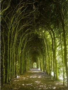 Tree tunnel.     Weldam Castle, Overijissel,  Netherlands