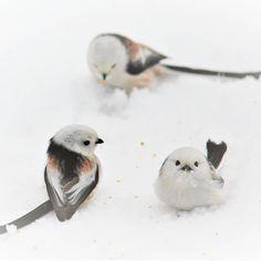 Funny Birds, Cute Birds, Animals And Pets, Cute Animals, Wonder Pets, Three Little Birds, Nature Photos, Beautiful Birds, Puppies