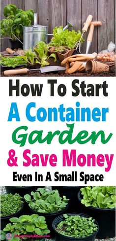 Container Gardening – A Clever Way to Save Money and Space ~ Gardening and growing your own food is a great way to save money and eat healthier for less & you don't need a huge space either. Read on to learn all the ins and outs of container gardening. Growing Tomatoes, Growing Vegetables, Gardening Vegetables, Gardening For Beginners, Gardening Tips, Gardening Quotes, Ways To Save Money, How To Make Money, Money Tips